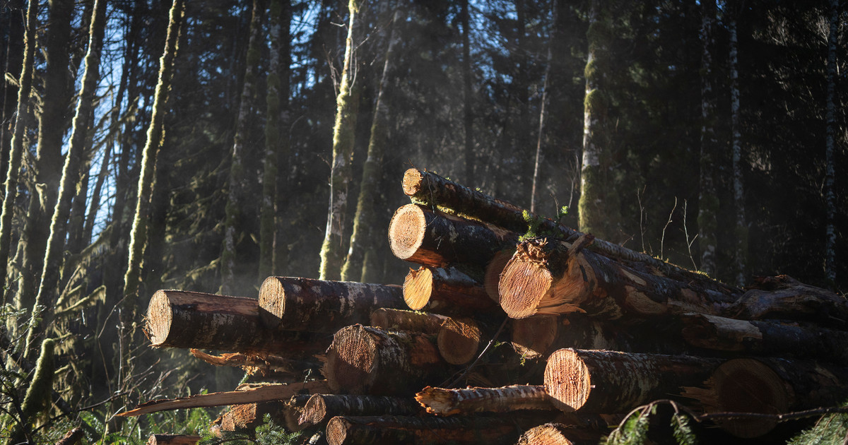 Oregon's Logging Industry Says It Can't Afford New Taxes. But Prices Have Never Been Higher and Profits Are Soaring.
